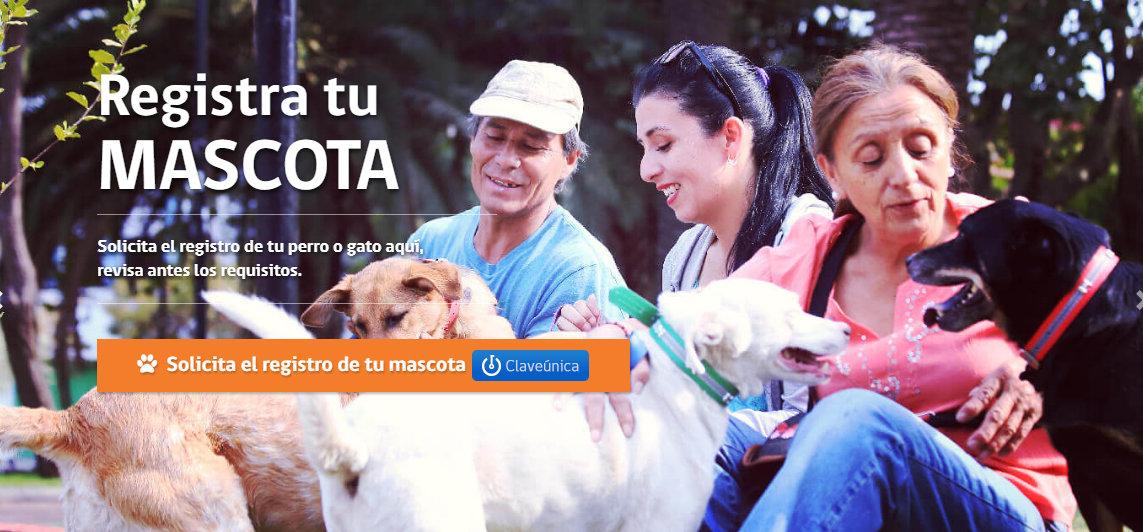 Lo que necesitas saber sobre el Registro Nacional de Mascotas