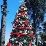 Este Viernes en Machalí: Encendido del árbol y llegada de viejito pascuero