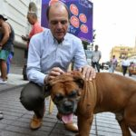 58% de los vecinos de Rancagua – Machalí consideran a los perros callejeros como el principal problema de sus barrios