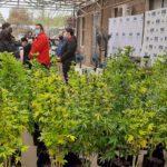 Incautan casi cien plantas de marihuana en El Polo de Machalí