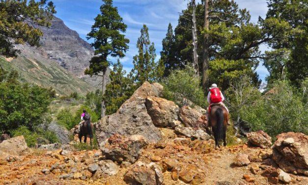Reabren la Reserva Nacional Río de Los Cipreses
